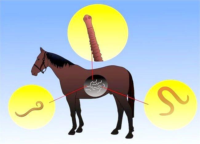 Imaginea intitulată Salvarea unui cal abuzat Pasul 5