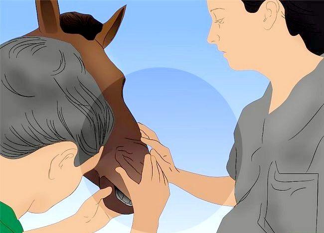 Imagine intitulată Salvarea unui cal abuzat Pasul 6