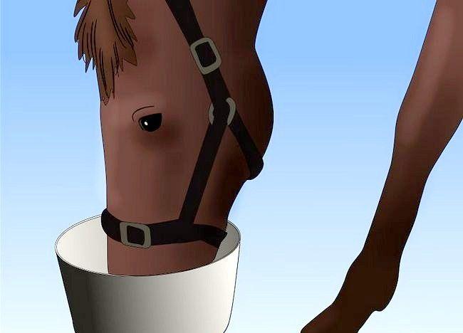 Imaginea intitulată Salvarea unui cal abuzat Pasul 7