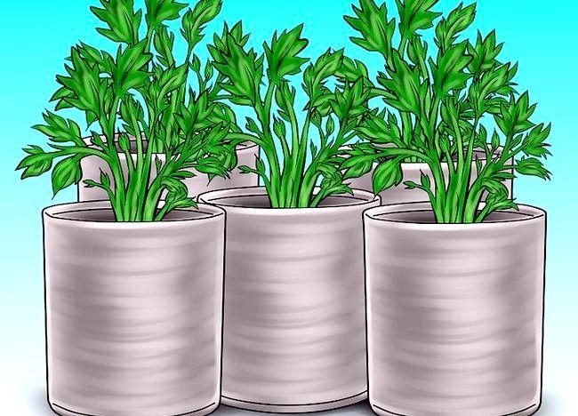 Imaginea intitulată Reciclarea recipientelor pentru decorarea grădinii Pasul 14
