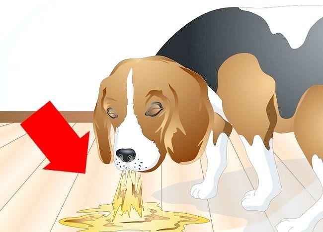 Imaginea intitulată Determinați dacă câinele dvs. are alergii alimentare Pasul 3