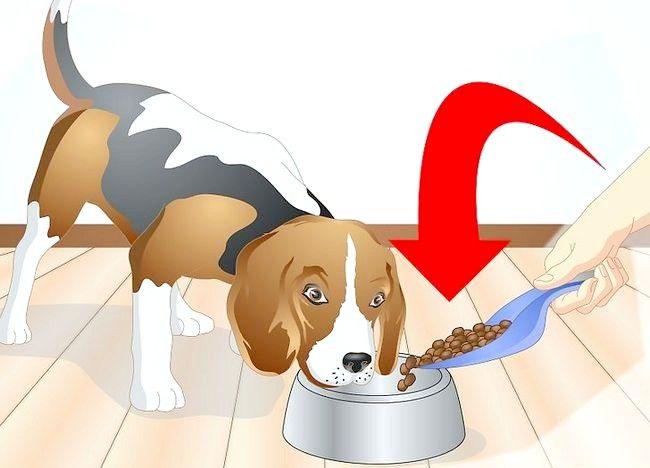 Imaginea intitulată Determinați dacă câinele dvs. are alergii alimentare Pasul 5