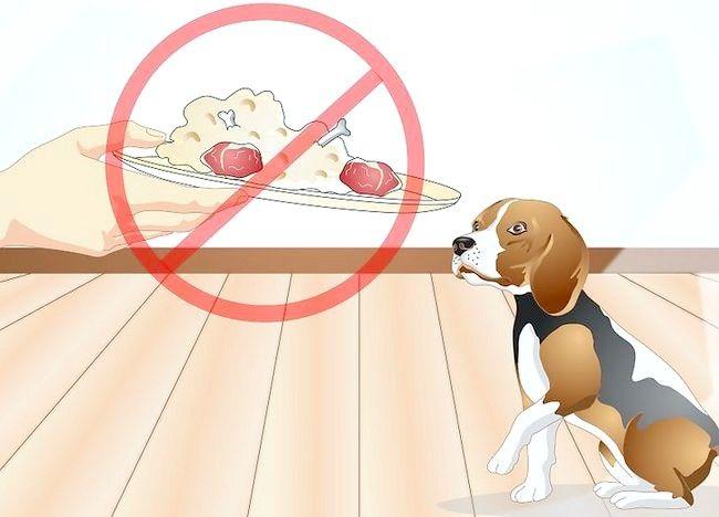 Imaginea intitulată Determinați dacă câinele dvs. are alergii alimentare Pasul 6