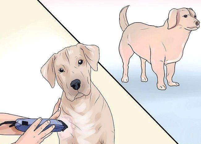 Imaginea intitulată Identificați mange pe câini Pasul 3
