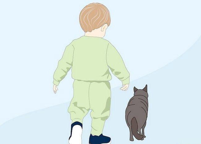Cum sa stii daca un copil este alergic la pisici