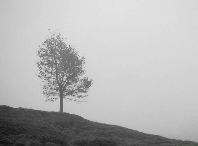 Cum să acceptați ca o persoană liniștită și rezervată