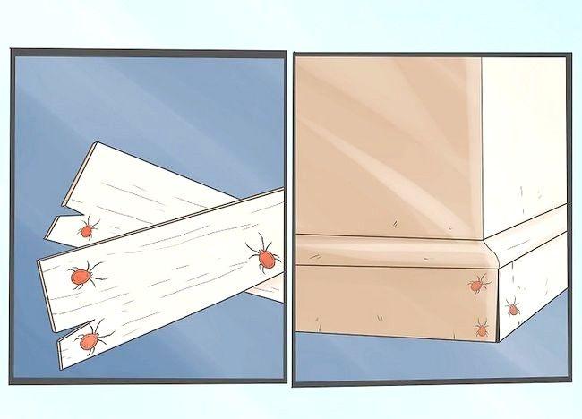 Cum sa scapi de acarienii din trifoi