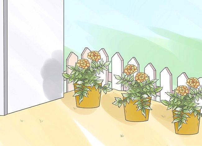 Imaginea intitulată Îndepărtați acarienii din trifoi Pasul 6