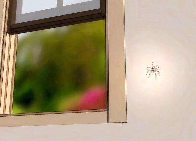 Cum să scapi de păianjeni fără a le ucide