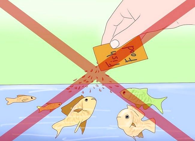 Cum sa scapi de melci intr-un acvariu