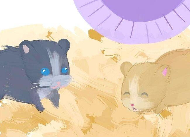 Imagine intitulată Îndepărtați acarienii din hamster` class=