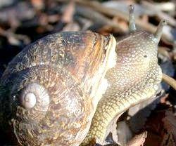 Imagine intitulată Snail2 3326