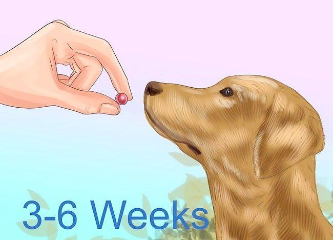 Imaginea intitulată Tratarea foliculitei la câini Pasul 7