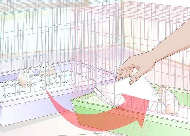 Imaginea intitulată Tratarea bolii de piele la hamsteri Pasul 12