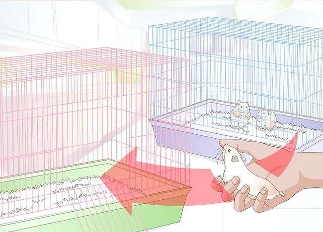 Imaginea intitulată Tratarea bolilor de piele la hamsteri Pasul 2