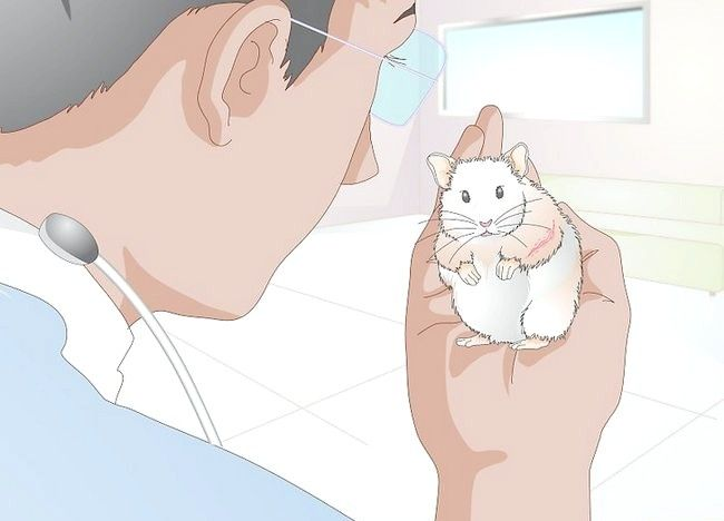 Imaginea intitulată Tratarea bolii de piele la hamsteri Pasul 10
