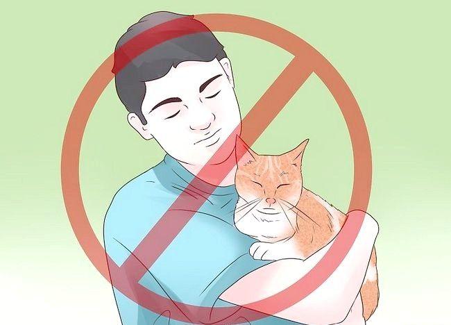 Imaginea intitulată Tratarea epilepsiei la pisici Pasul 11