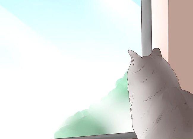 Imaginea intitulată Epilepsia epilepsiei la pisici Pasul 13