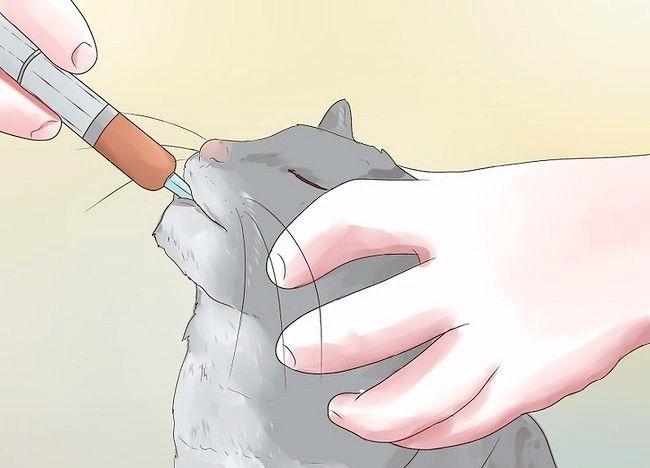 Imaginea intitulată Epilepsia epilepsiei la pisici Pasul 8
