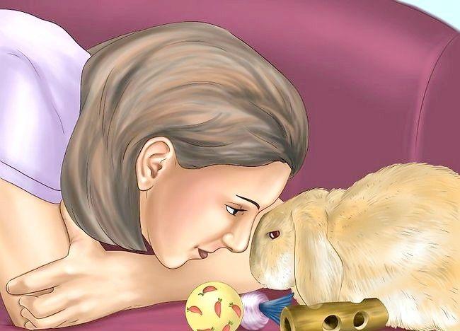 Cum de a instrui un iepure