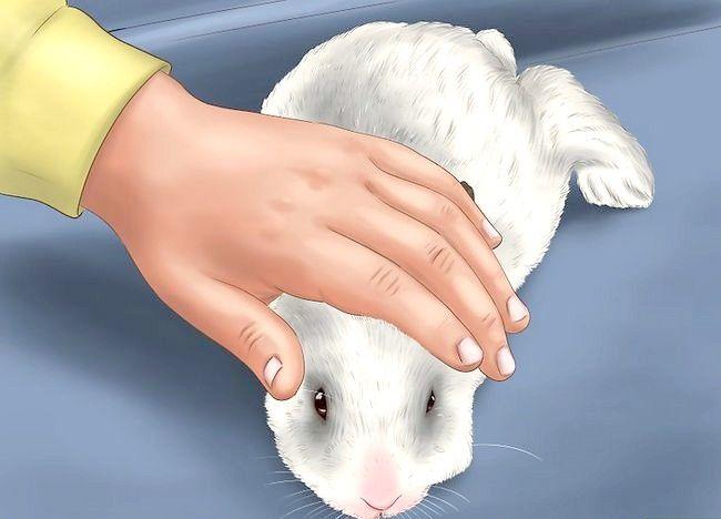 Poza intitulată Train a Rabbit Step 11