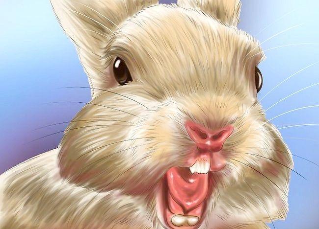 Poză intitulată Train a Rabbit Step 17