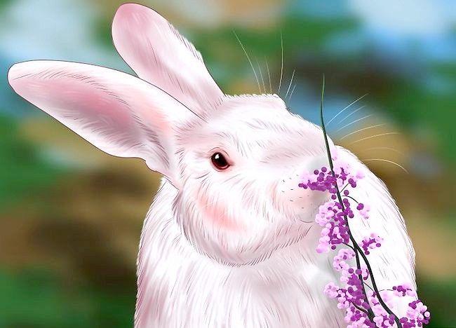 Poză intitulată Train a Rabbit Step 2