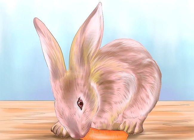 Poză intitulată Train a Rabbit Step 5