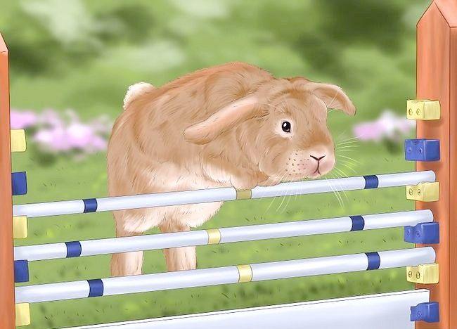 Poza intitulata Train a Rabbit Pasul 7