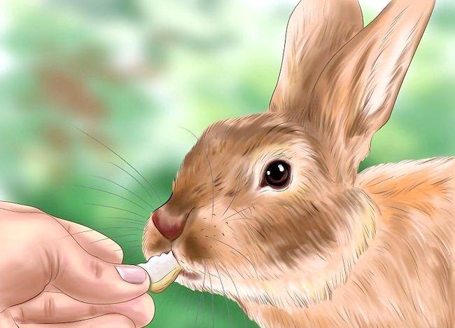 Poza intitulată Train a Rabbit Pasul 9