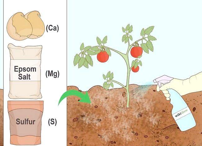 Imagine intitulată Turn Clay In Soil Growing Pasul 3