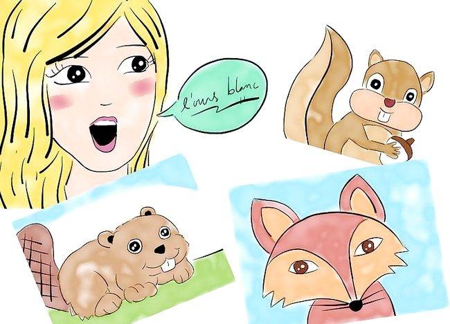 Cum să utilizați limba franceză în conversațiile despre mamifere
