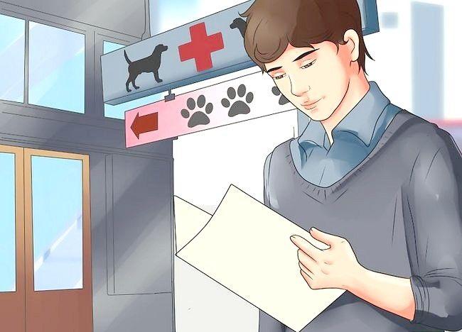 Cum să vaccinați un câine împotriva rabiei la domiciliu