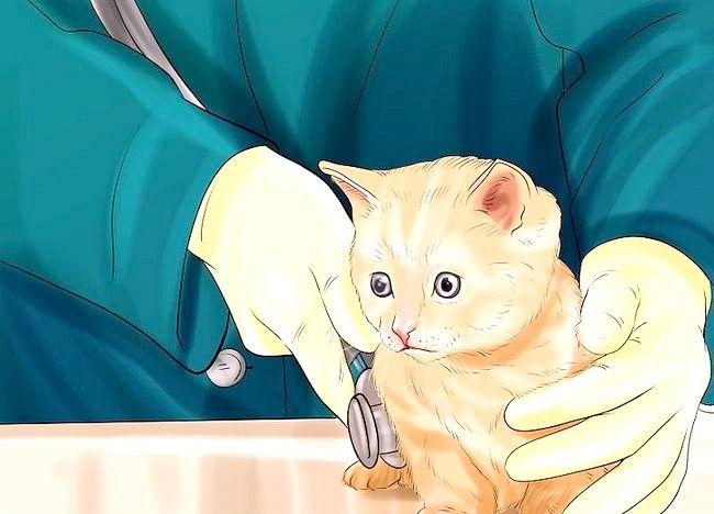 Cum să joci o pisică