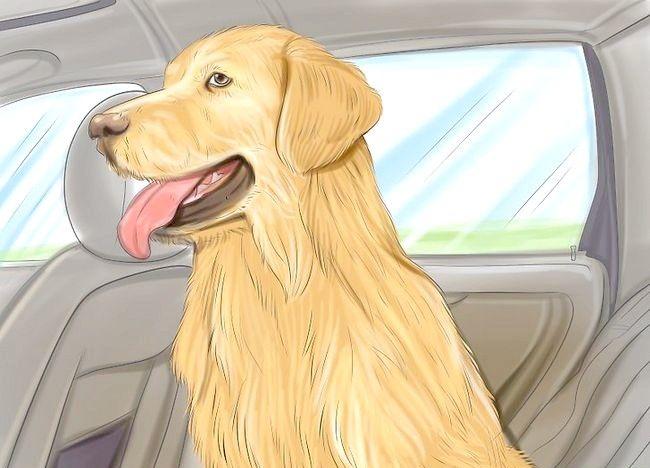 Cum să călătorești cu un câine