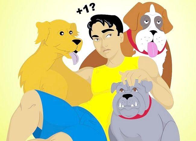 Cum să trăiești într-o casă cu câini diferiți